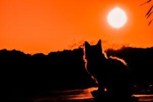Gato mirando la puesta de sol